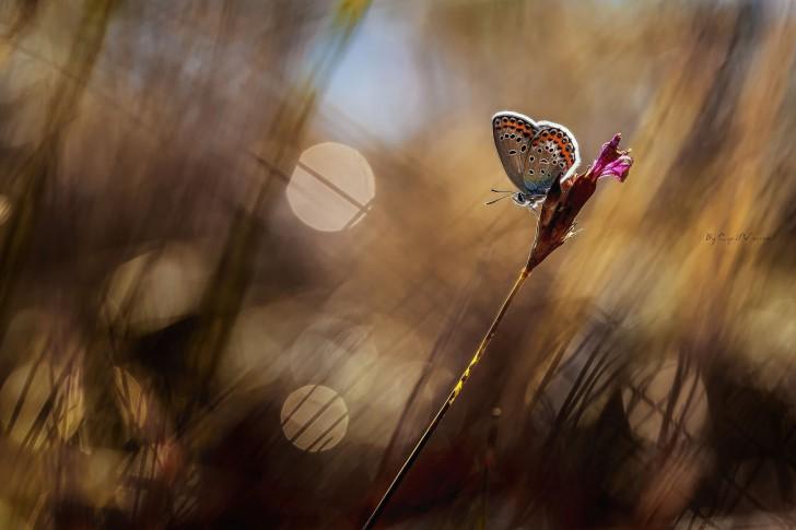 Butterfly-Grass-Bakgrunn-Blur-485x728