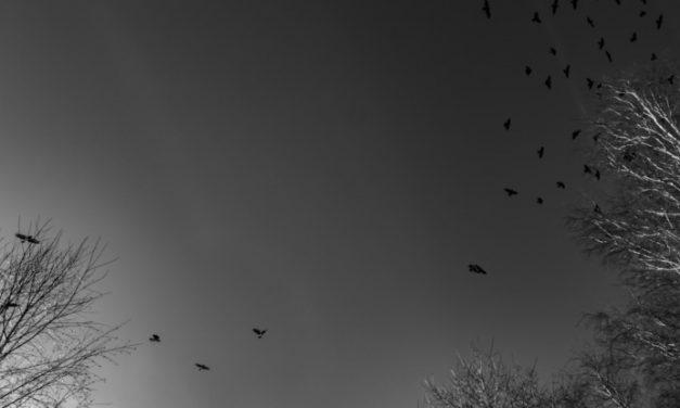 pszeudo, tájélmény, heg – versek