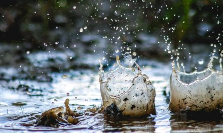 Palotás Zsuzsi: Fent és távol, Áram a vízben, Folyékony